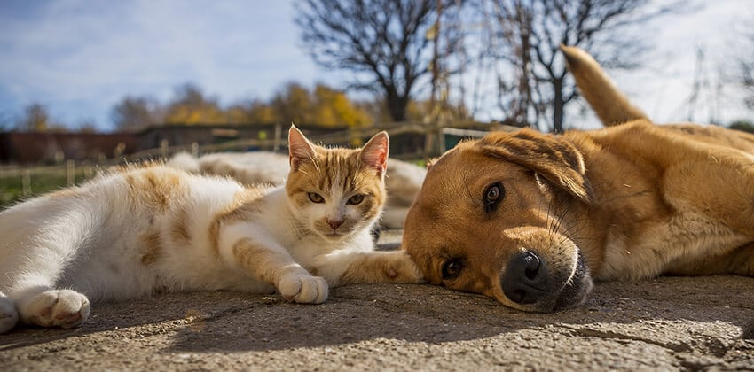 6 Ways to Turn a Love of Pets into Income