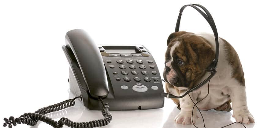 Phone Interview Success Tips